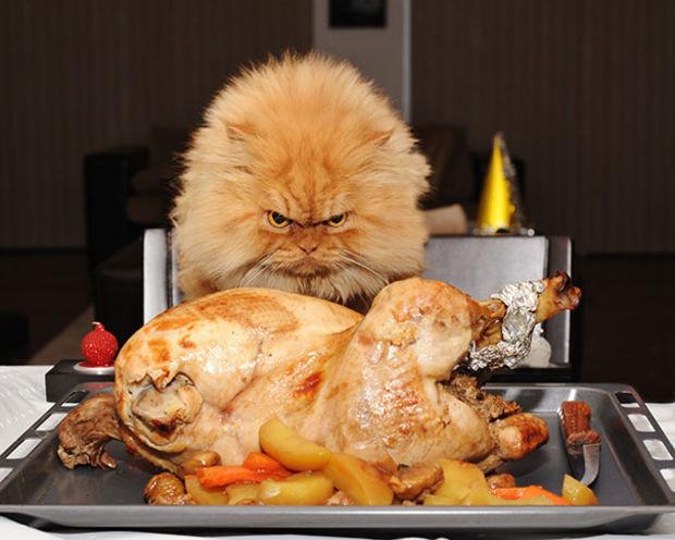 kucing lucu lagi ngambek