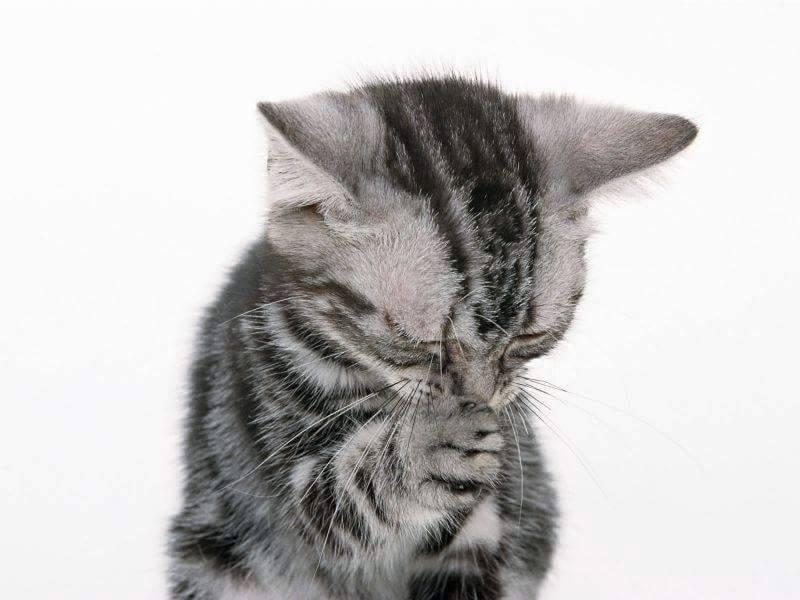 kucing lucu sedang berdoa