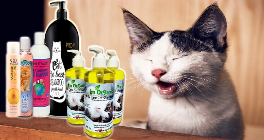 Gunakan Sampo Khusus Kucing