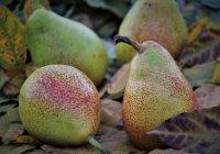 pears, fruit, foliage