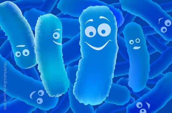 simbiosis mutualisme antara Manusia Dan Bakteri Usus Halus